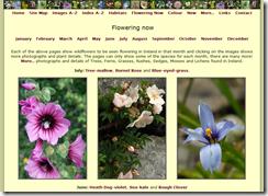 Irish Wildflowers -- online help with wildflower ID in Ireland
