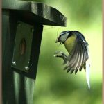 blue-tit-nest-box.jpg