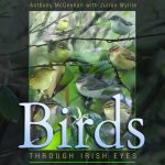 Birds through Irish Eyes