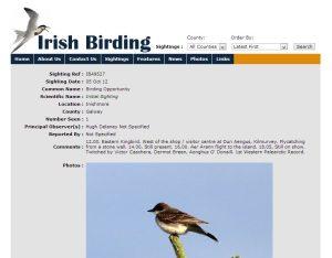 Irish Birding Eastern Kingbird