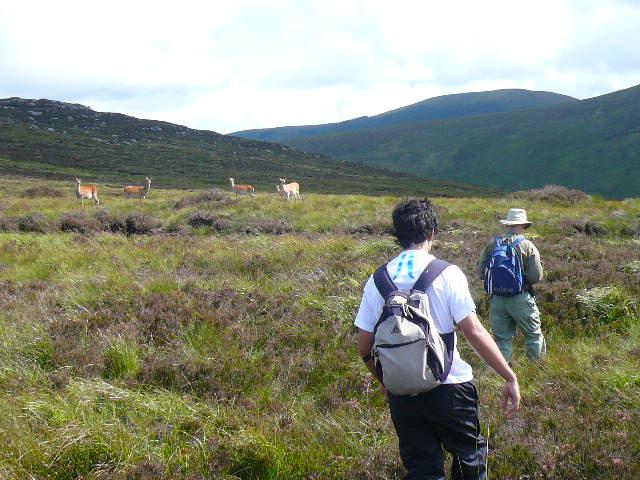 Hiking in Glenealo with deer