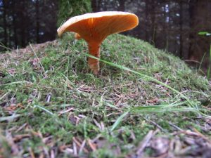 Wild harvest by Jho Harris