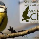 Merry Christmas from Ireland's Wildlife
