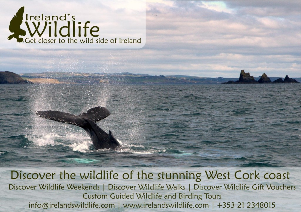 Ireland's Wildlife Poster