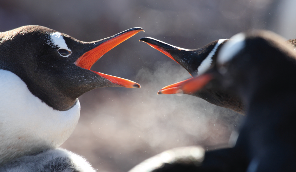 Antarctic BirdsTalk
