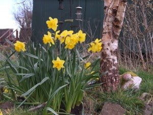 BunchofDaffs