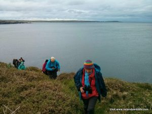 Wildlife watching from the cliffs at Rosscarbery