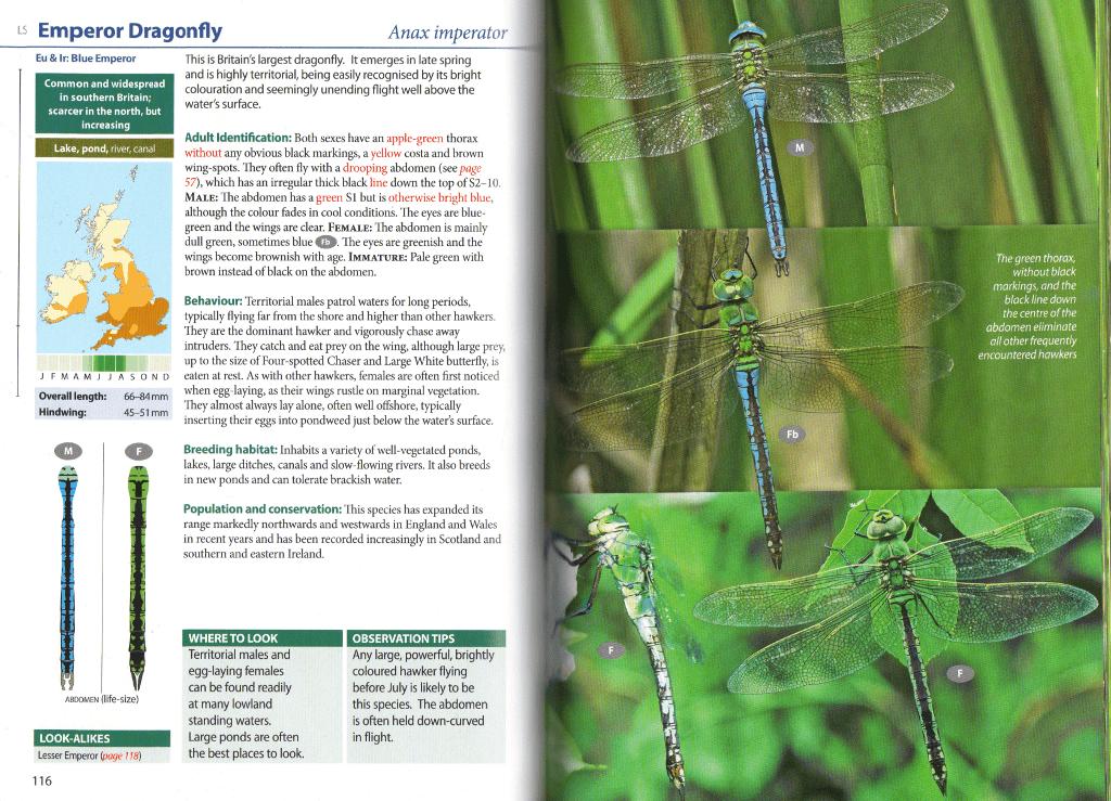 Emperor Dragonfly species account