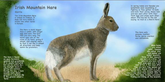 Irish Hare -- My First book of Irish Animals