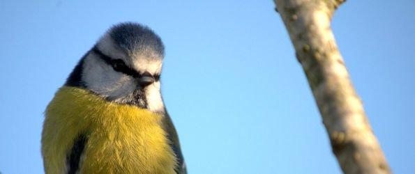 9 top tips for feeding your garden birds