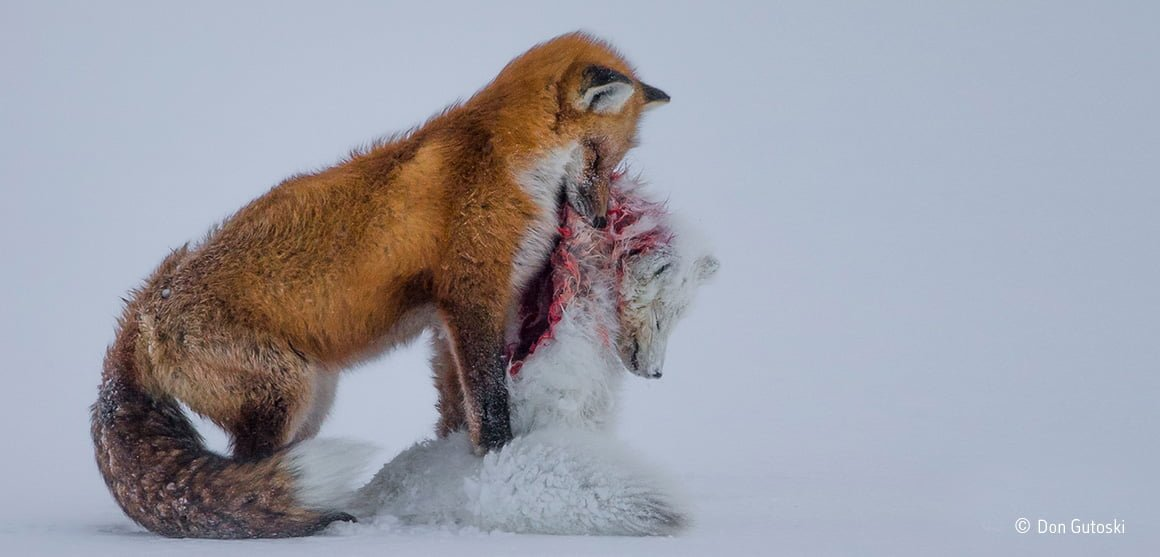 Wildlife Photographer of the Year 2016 accepting entries