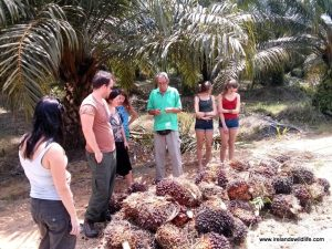 Robert Chong explains the impact of the palm oil industry