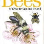Bee field guide cover