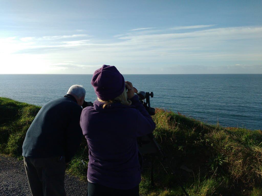 Fin whales to firecrests — wildlife extremes on the Wild Atlantic Way.