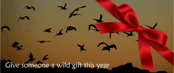 Christmas gifts with a wildlife twist