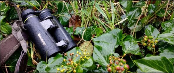 Vanguard Endeavor EDIV 10×42 Binocular Review