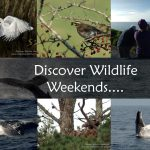 Wildlife and nature tours Ireland
