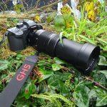 Panasonic Lumix GH5 for Wildlife Photography